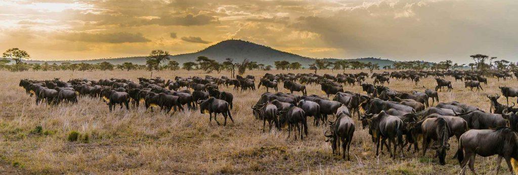 Great Serengeti Wildebeest Migration Safari