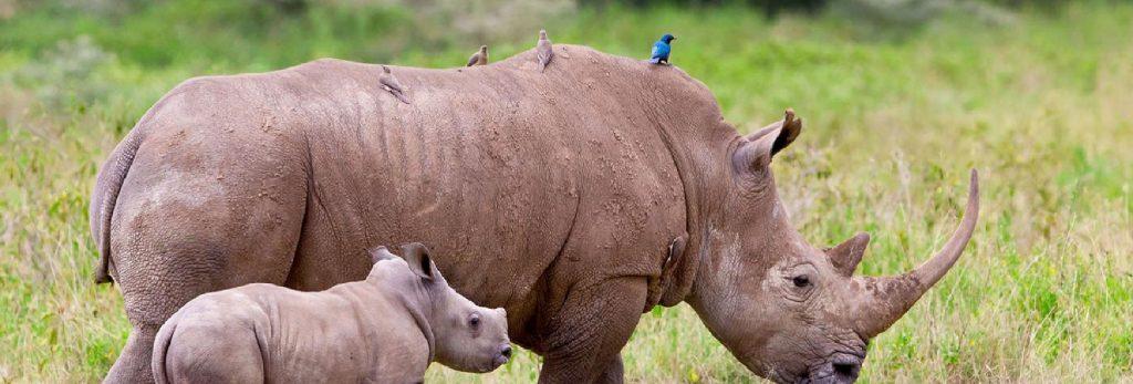 Safari Lift Africa