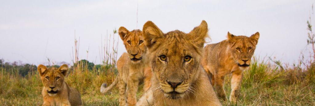 Africa safari destination